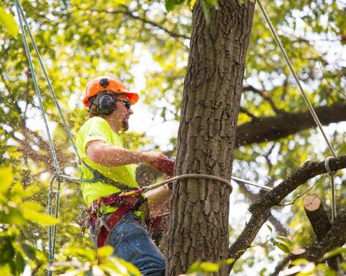 tree-trimming-overland-park-1024x683.jpg